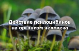 Последствия приема галлюциногенных грибов